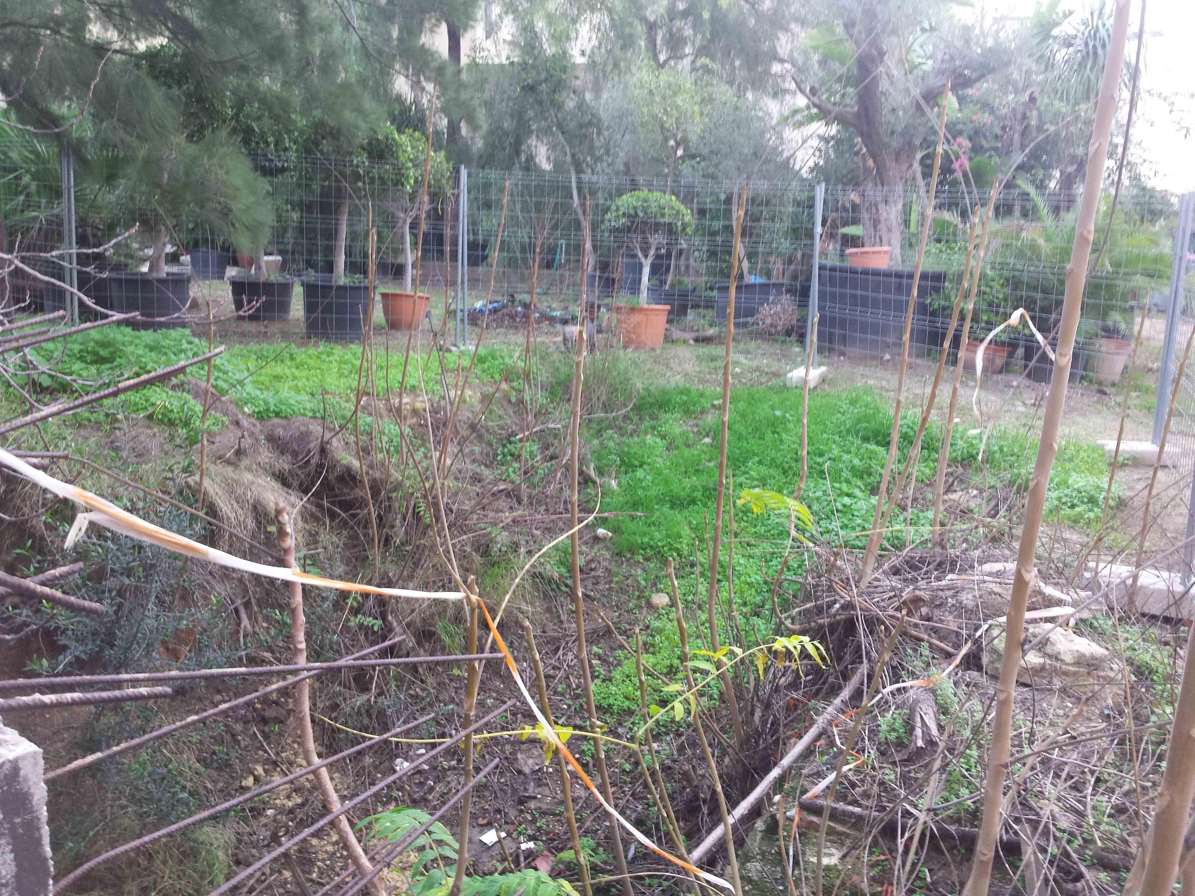 jardin-botanico1